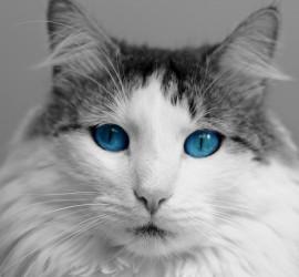 cat-817875_1920 - Copy